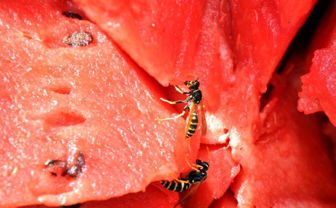 diese 10 tipps helfen wirklich gegen insektenstiche antenne bayern. Black Bedroom Furniture Sets. Home Design Ideas
