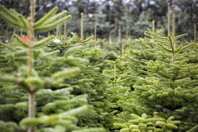 weihnachtsbaum unn tzes wissen zum angeben beim weihnachtsessen antenne bayern. Black Bedroom Furniture Sets. Home Design Ideas