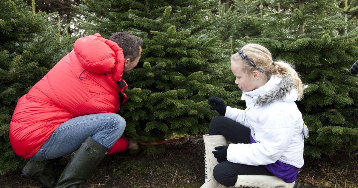 so sichern sie den weihnachtsbaum im auto antenne bayern. Black Bedroom Furniture Sets. Home Design Ideas