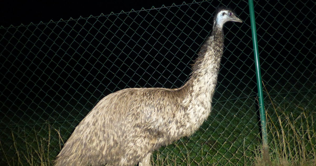 emu besitzer aus unterfranken hat seinen riesenvogel zur ck antenne bayern. Black Bedroom Furniture Sets. Home Design Ideas