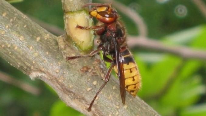 so gef hrlich sind die typischen sommer insekten antenne bayern. Black Bedroom Furniture Sets. Home Design Ideas