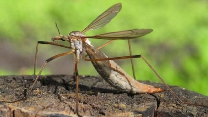 So gefährlich sind die typischen Sommer-Insekten | ANTENNE ...