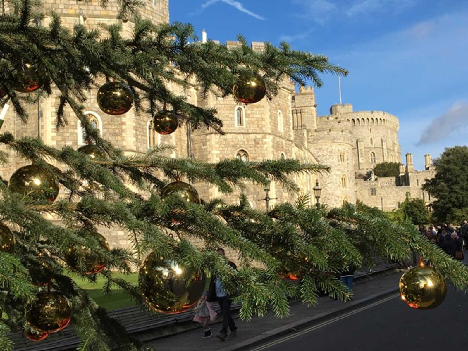 von oberfranken nach gro britannien coburger christbaum verzaubert die queen antenne bayern. Black Bedroom Furniture Sets. Home Design Ideas