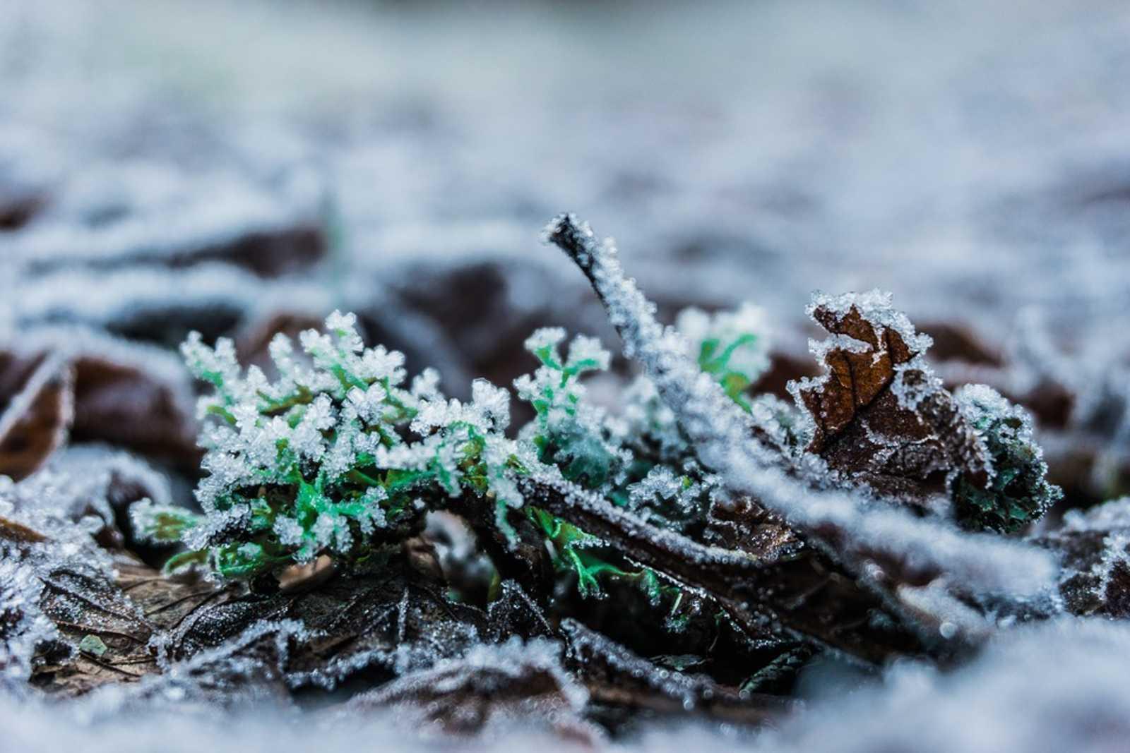 Gartentipps Für Den März: Die Neuen Stars & Wer Jetzt Unters ... Gartentipps Winter Beachten