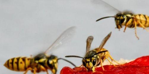 diese 10 tipps helfen wirklich gegen insektenstiche. Black Bedroom Furniture Sets. Home Design Ideas