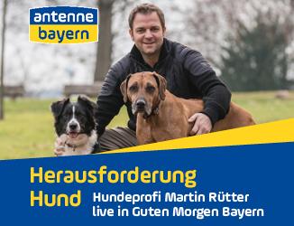 Martin Rütter live bei ANTENNE BAYERN: Alle Antworten des Hundeprofis zum Nachhören!