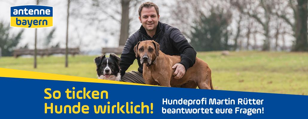 Hundeprofi Martin Rütter beantwortet eure Fragen