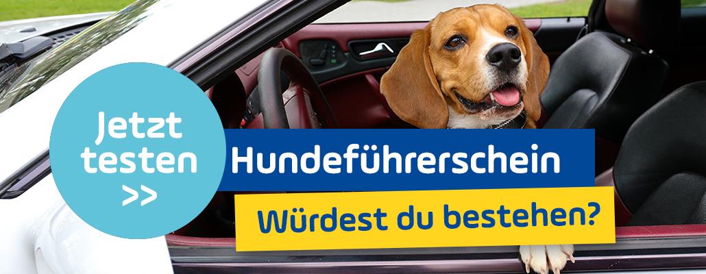 Hundeführerschein: Würdest du diese Prüfung bestehen?