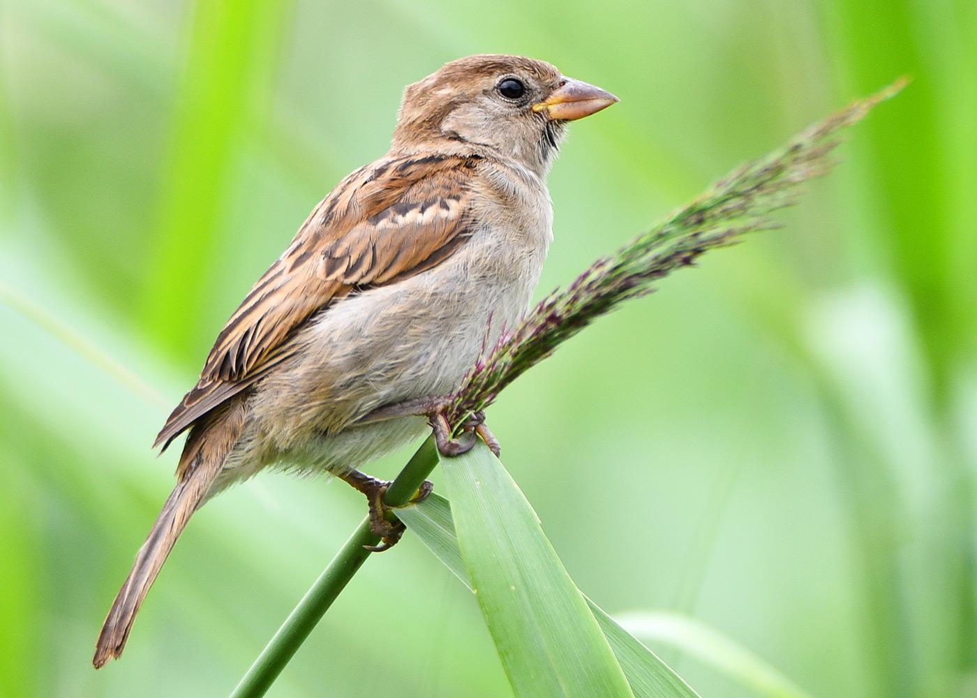Welcher Vogel hockt hier?
