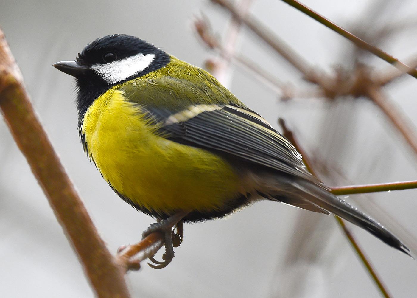 Erkennst du diesen Vogel?