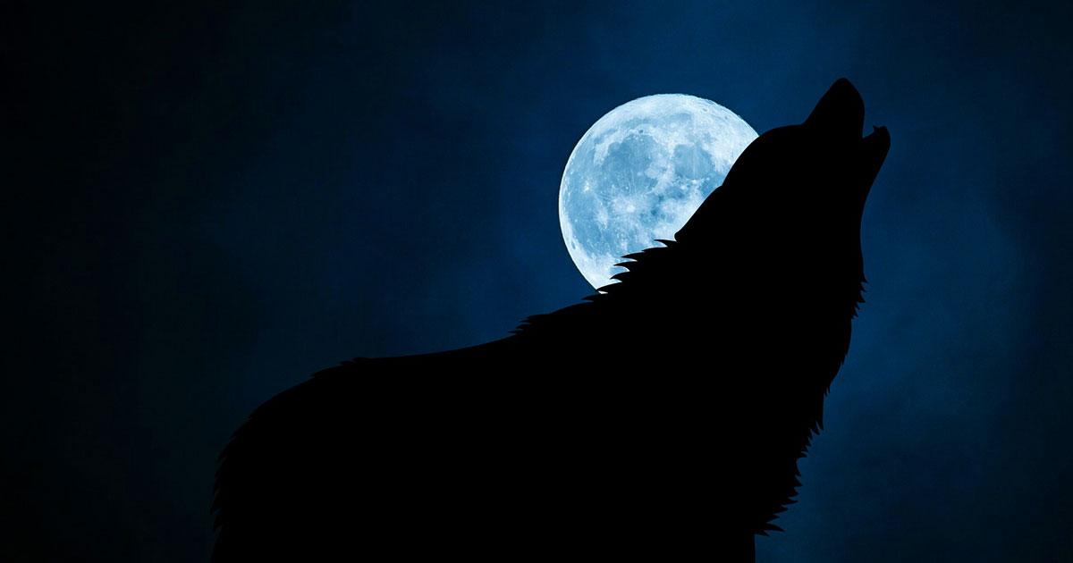Vollmond: So stellst du fest, ob du ein Werwolf bist!