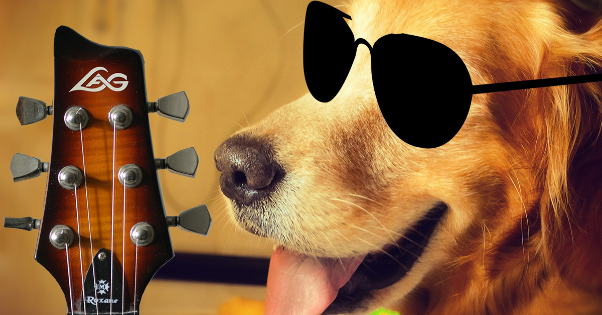 Welt-Hunde-Tag: We Wanna Dog N' Roll All Night!