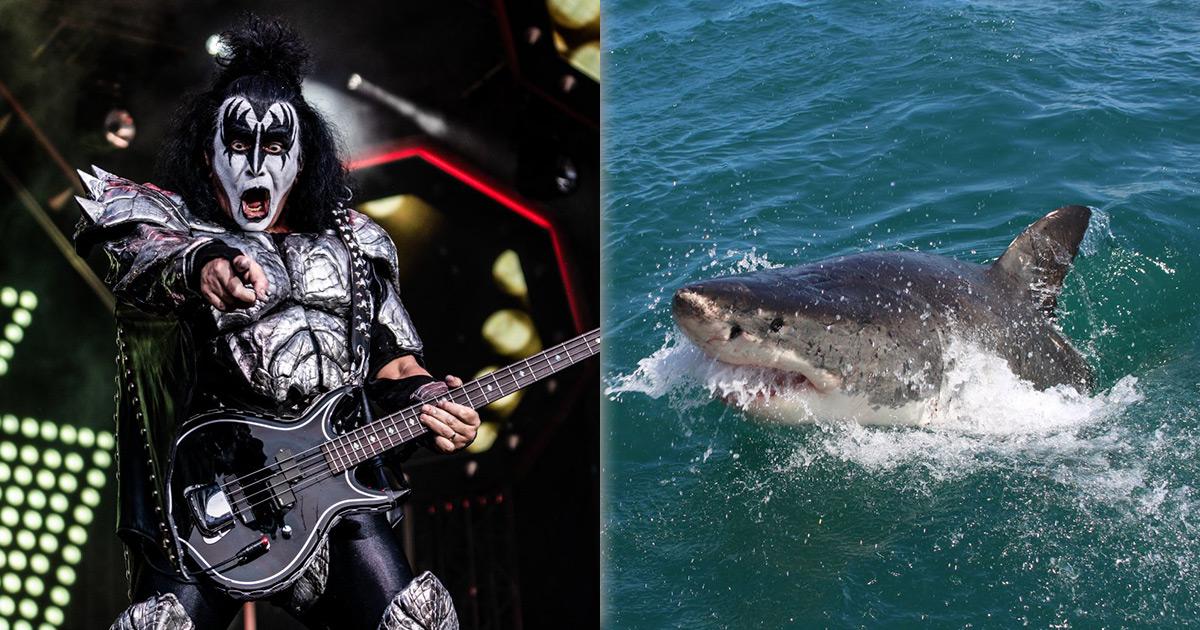 KISS: Hard Rock für die Haie