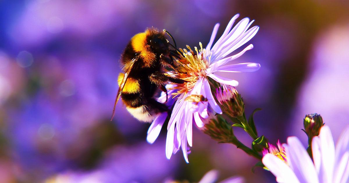 Die 10 besten Rock-Songs für Bienen