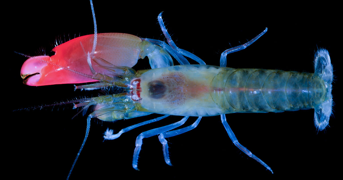 Spinne, Krebs und Co.: Top 10 der Lebewesen, die nach Rockstars benannt sind