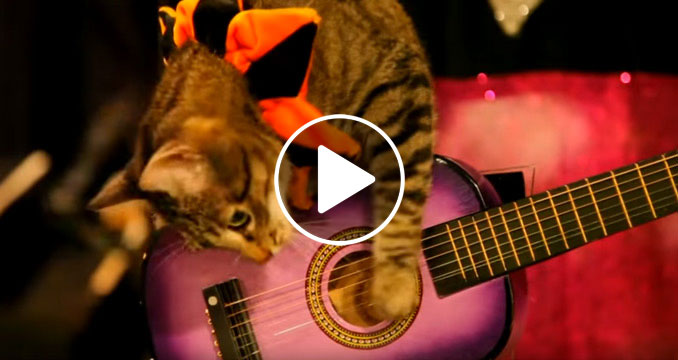 Full Metal Cat Content: Die 5 coolsten Rock-Katzen des Internets!