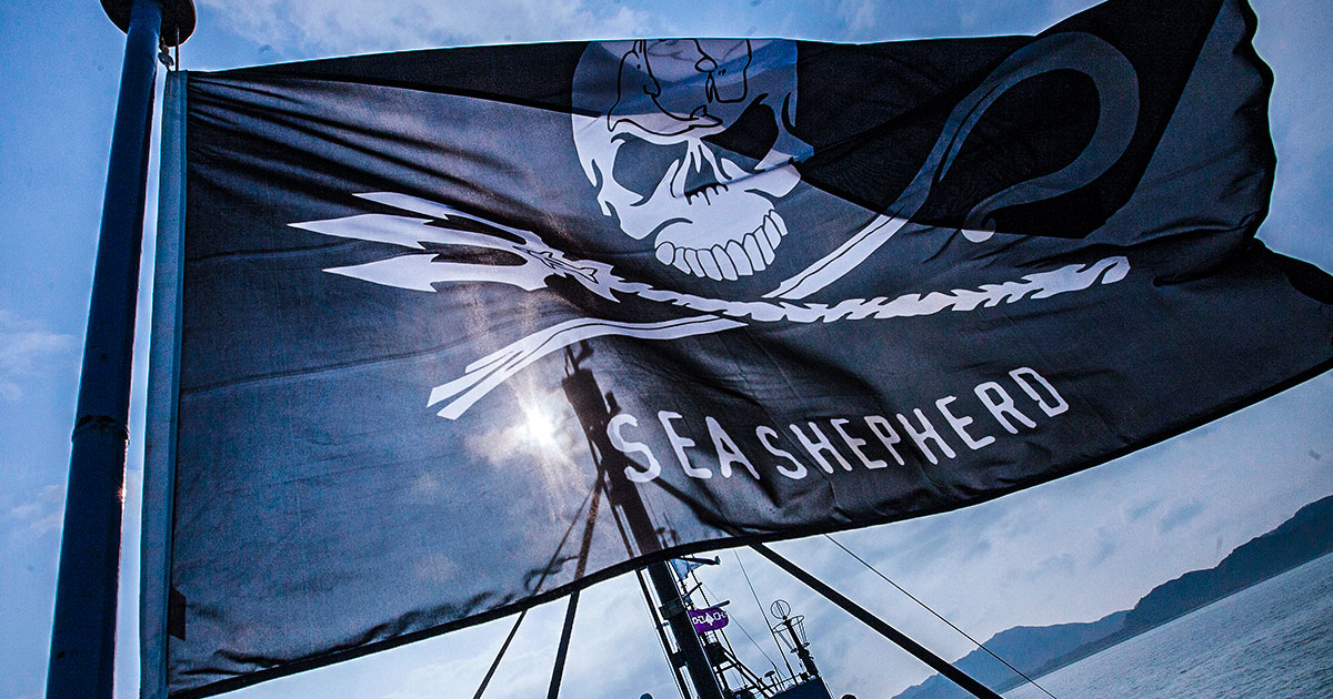 World Ocean Day: Unser Interview mit Manuel Abraas von Sea Shepherd