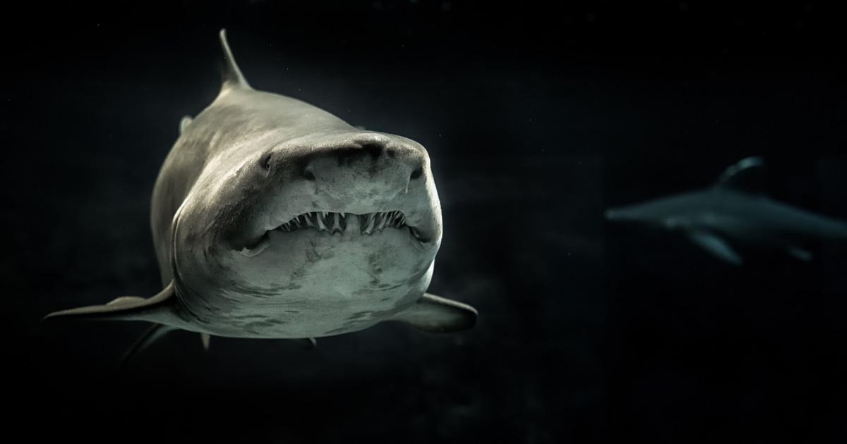 Neue Studie: Haie finden Heavy Metal lecker