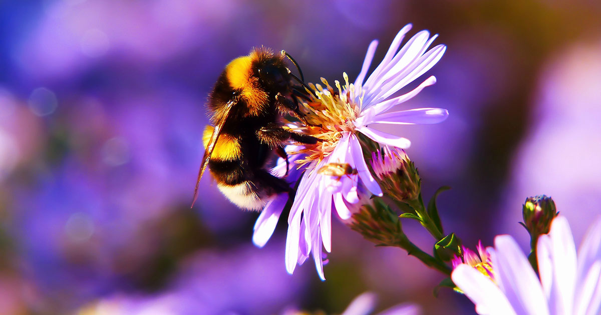 Honey, bee mine: Die 10 besten Rock-Songs zum Welt-Bienentag