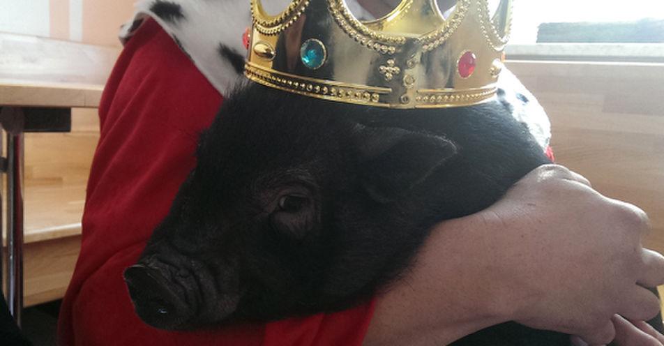 Schwein gehabt: Rudi findet neues Zuhause in Freystadt in der Oberpfalz