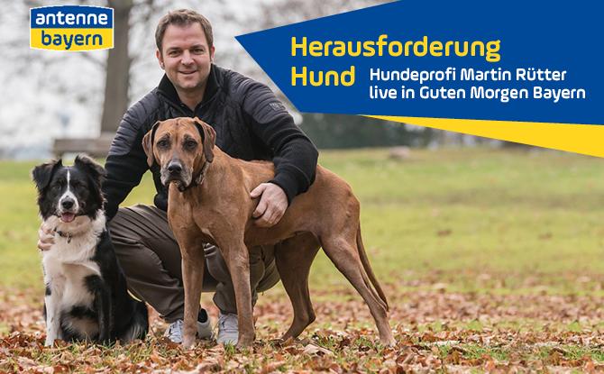 Martin Rütter live bei ANTENNE BAYERN: Stellt dem Hundeprofi eure Fragen!