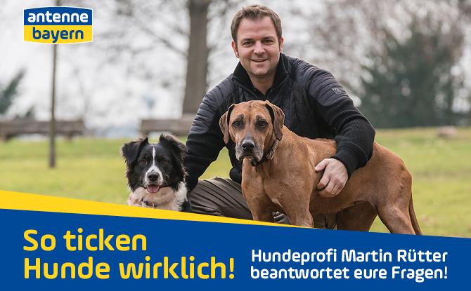 So ticken Hunde wirklich: Hundeprofi Martin Rütter beantwortet eure Fragen