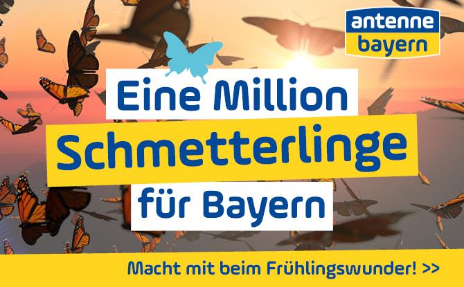 Das große ANTENNE BAYERN Frühlingswunder: Eine Million Schmetterlinge für Bayern