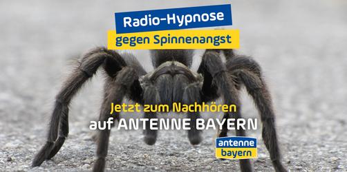 Die ANTENNE BAYERN Radio-Hypnose gegen Spinnenangst