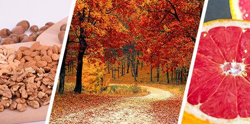 10 Tipps gegen Heißhunger im Herbst: So haltet ihr euer Gewicht und bleibt fit