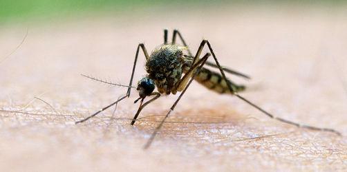 Test: Diese Mückensprays helfen wirklich