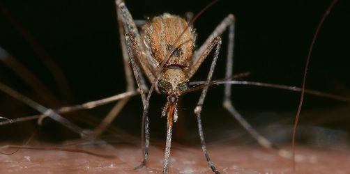Mückensaison: Die besten Tipps und Tricks gegen Stiche