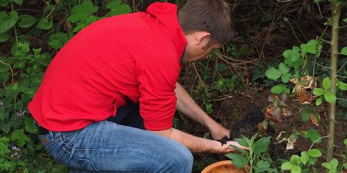 Rückenschmerzen bei der Gartenarbeit vorbeugen: Hier sind die besten Tipps