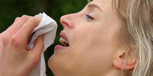 Heuschnupfen im Herbst: Diese Pollen fliegen weiter