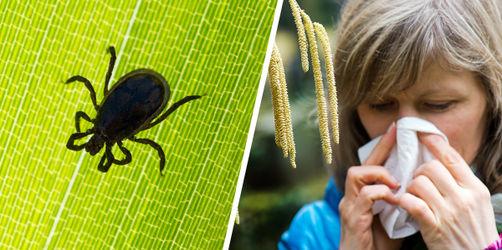 Milder Winter 2020 mit üblen Folgen: Frühstart für Zecken und Pollen