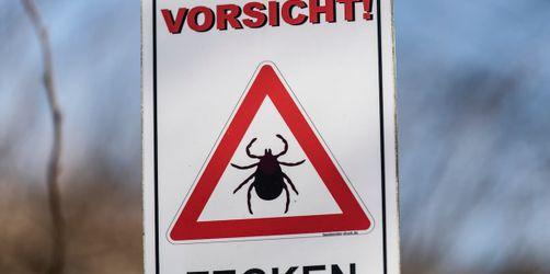 Zecken-Alarm in Bayern: Vorsicht bei dieser XXL-Zecke