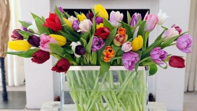 wieso wachsen tulpen eigentlich in der vase weiter antenne bayern. Black Bedroom Furniture Sets. Home Design Ideas