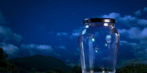 Lichtspektakel: Warum Glühwürmchen leuchten und wann ihr sie sehen könnt