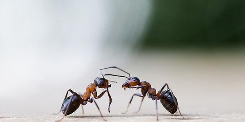Die fünf besten Tipps gegen die Plage: So werden Sie Ameisen wieder los
