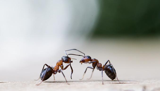 Die fünf besten Tipps gegen die Plage: So werden Sie Ameisen ...