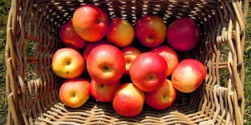 Gartentipps für den August: Alles über die perfekte Apfelernte