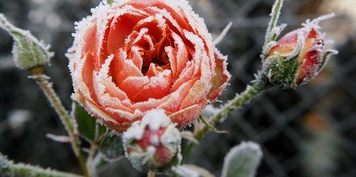 10 Tipps: So macht ihr euren Garten optimal winterfest
