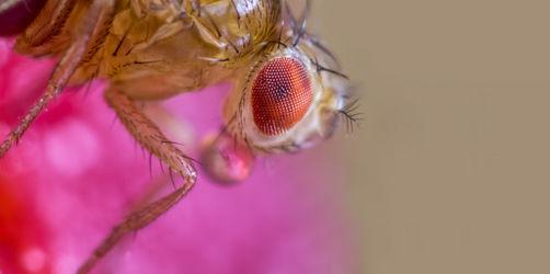 Fruchtfliegen bekämpfen: Die 6 besten Tipps gegen die Küchen-Plage