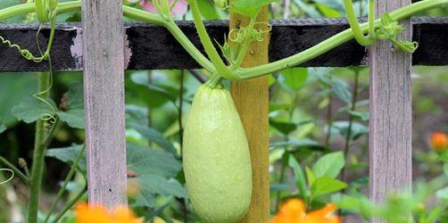 Regeln rund um den Gartenzaun: Was darf ich in meinem Garten und was darf der Nachbar?