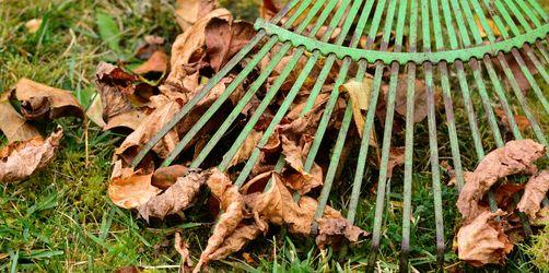Mit diesen Tipps wird Laub richtig nützlich für den Garten