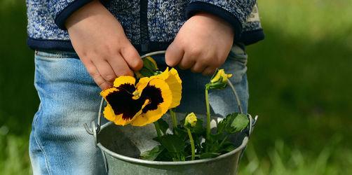 Die Kinder spielen im Garten - auf diese Pflanzen sollten Sie lieber verzichten