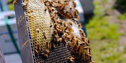 10 erstaunliche Fakten über Bienen