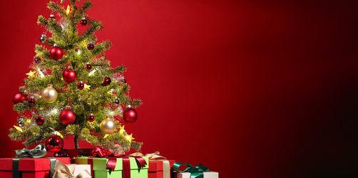 Kauf, Pflege, Transport: So findet ihr den perfekten Christbaum