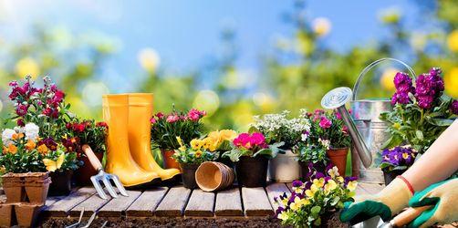 Blumen, Bäume, Beete: So macht ihr Balkon und Garten fit für den Frühling