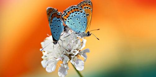 Insektensterben aufhalten: Das könnt ihr selbst tun