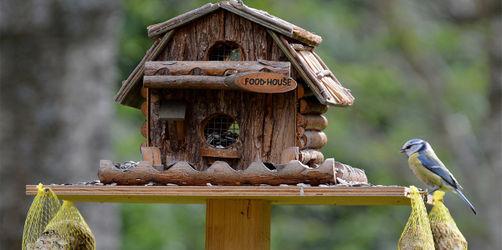 Vögel im Herbst und Winter richtig füttern